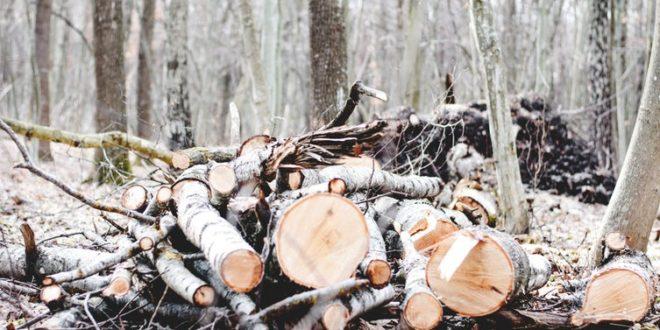 Investir dans un groupement foncier forestier : quels avantages ?