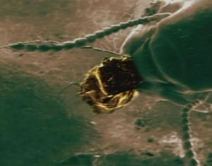 Les termites peuvent utiliser des particules d'or pour construire leurs termitières